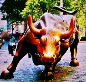 bull imm 3
