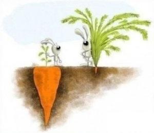 ... carote ...