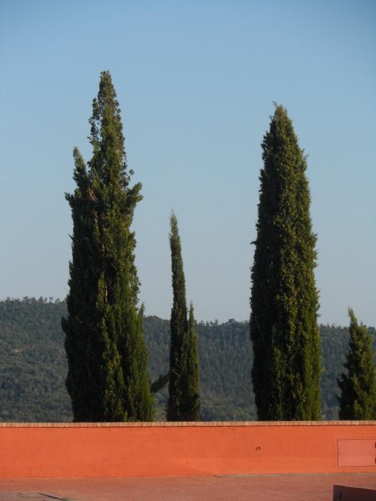 Tuscia...               on the road (      Giuncarico di Gavorrano - Grosseto -)         Estate 2015